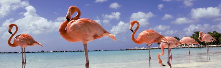 Flitterwochen Karibik