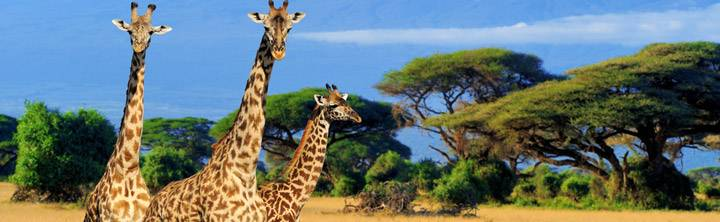 Günstig nach Kenia