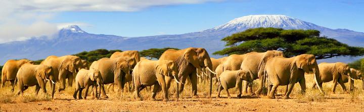 Top-Urlaubsregionen Kenias, inkl. Flug