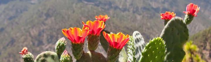 Last Minute La Palma zu Schnäppchenpreisen!