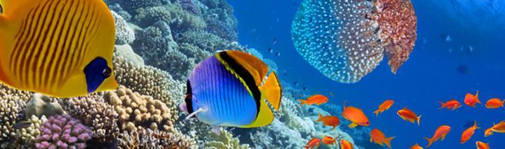Sharm el Sheikh Langzeiturlaub