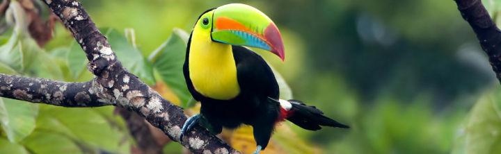 Costa Rica Reisen (inkl. Flug) für jeden Geldbeutel!
