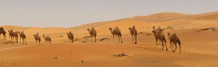 Sharjah Urlaub