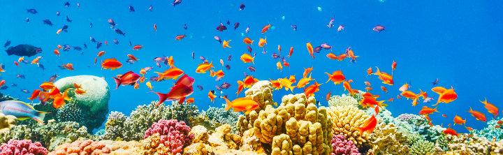 Sharm el Sheikh Pauschalreisen (Flug & Hotel) für jedes Budget!
