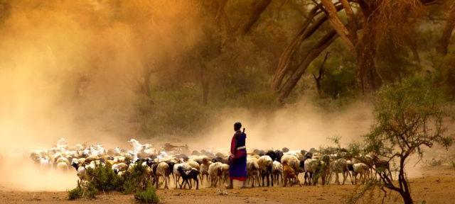 Die beste Reisezeit für Tansania erfahren Sie hier bei 5vorflug.de!
