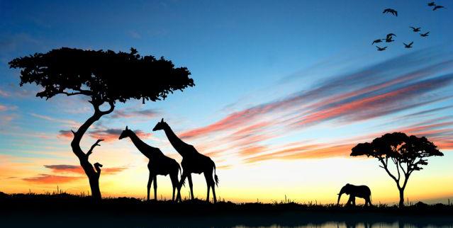 Die beste Reisezeit für Kenia erfahren Sie hier bei 5vorflug.de!