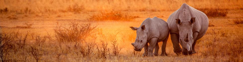 Rundreise durch Tansania: Safari und Strandurlaub in Ostafrika