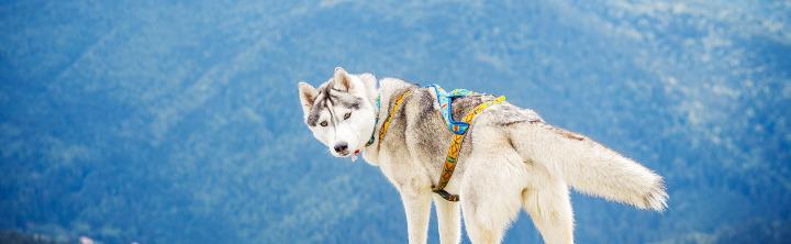Urlaub im Allgäu mit Hund