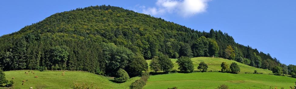 Wellnessurlaub Schwarzwald